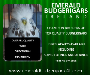 Emerald Budgerigars - Click for more info...