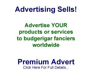 Premium ad - 300 by 250 pixels