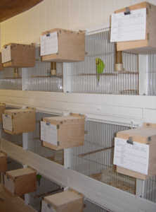 tuxford_breeding_cages