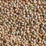 Seeds We Find In Our Mixtures – Terry Tuxford, UK